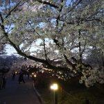 落ち着いて桜を楽しみたいなら京都府立植物園へ行こう!