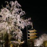 これぞ京都の美!世界遺産「東寺」の夜桜ライトアップ☆