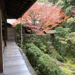 妙心寺の塔頭「桂春院」で美しい庭園を愛でる。期間限定のモシュ印とは!?