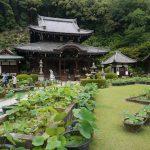 あじさいの名所「三室戸寺」に行ってきました!