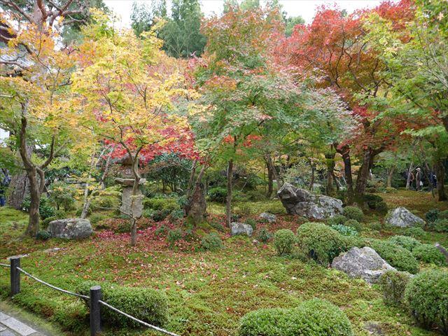 紅葉し始めた圓光寺の見事な池泉回遊式庭園