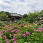 【京都・福知山】1万株のあじさいが咲き乱れる丹州観音寺を参拝